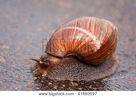 Movendo-se sobre a superfície molhada do caracol