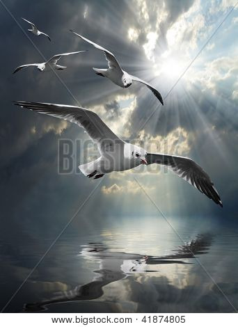 The Seagulls flying over a sea against a dramatic sky. Background from nature.