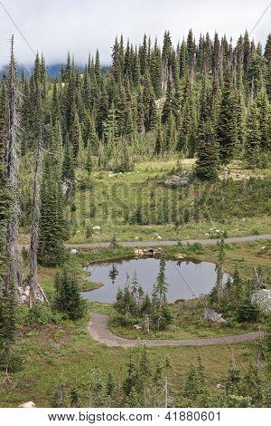 Pond On The Mountain 1