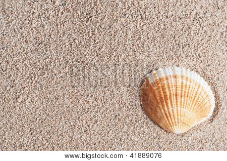 Seashell On Sand
