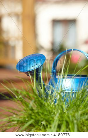 blue watering can in garden