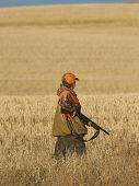 foto of ringneck  - Boy out hunting in the fall for Pheasants - JPG