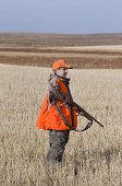foto of ringneck  - Pheasant Hunting in the Autumn in North Dakota - JPG