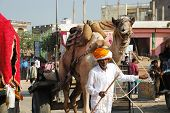 Old Tribal  Nomad Cameleer Going To Camel  Decoration Competition At Camel fair