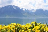 pic of montre  - Flowers against mountains and lake Geneva from the Embankment in Montreux - JPG