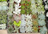 stock photo of xeriscape  - An assortment of succulent or cacti plants that grow in desert climates or that are used in xeriscaping - JPG
