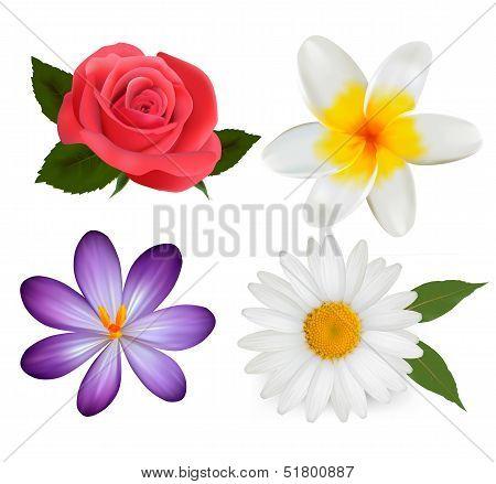 Big Set Of Beautiful Colorful Flowers. Design Flower Set. Vector Illustration.