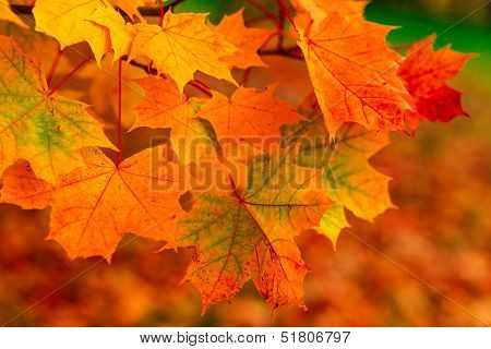 Beautiful colorful autumn picturesque park in sunny day with country rural road scenic. Fresh diminishing deciduous forest grove at dawn. Perspective vanishing alley. Foggy weather in late September.