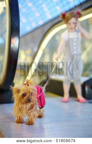 Little girl talks by cell phone and held on leash small dog next to escalator in mall. Focus on dog.