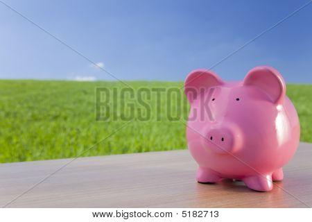 Pink Piggy Bank In A Green Field
