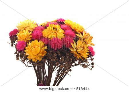 A Composition Of Dried Flowers