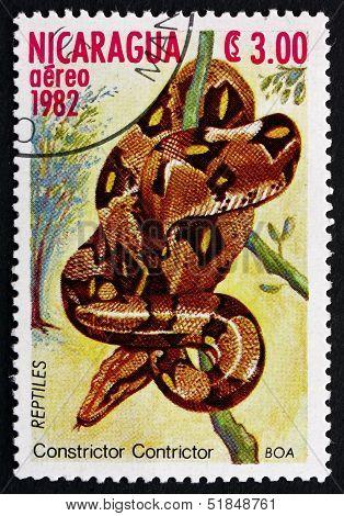 Postage Stamp Nicaragua 1982 Boa Constrictor, Snake