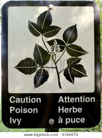 Caution Poison Ivy Sign