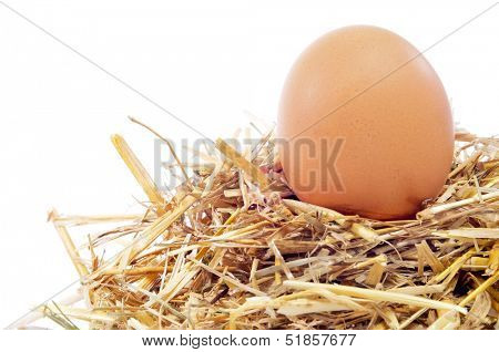 closeup of a chicken egg in a nest, on a white background