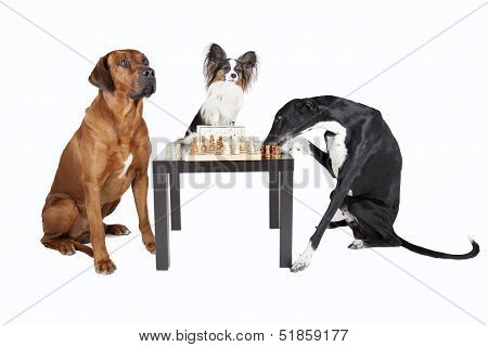 Three Dogs Playing Chess