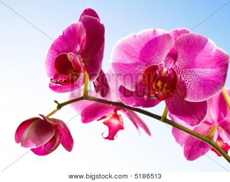 Orchid On The Blue, Sunny Sky