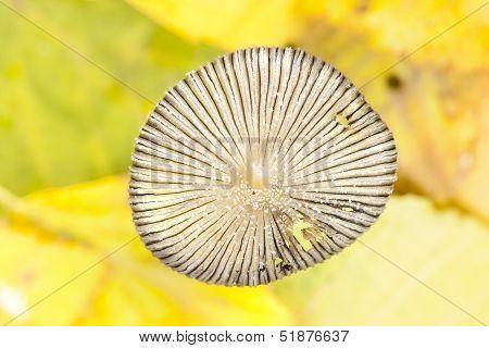 Fungus Cap Closeup