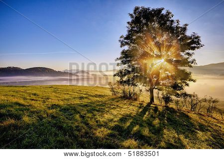 sunrise beams through the foggy tree in the national park Bohemian Switzerland, Czech Republic