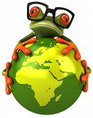 picture of amazonian frog  - Frog - JPG