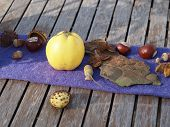 pic of beechnut  - Nice autumn decoration on a wooden table - JPG