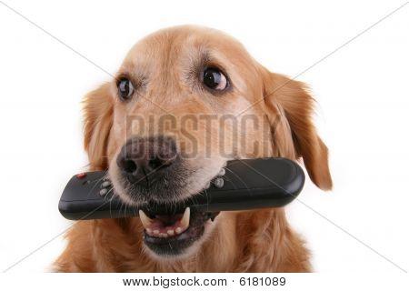 cão witth telecomando
