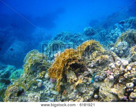 Coral Reef In Red Sea, Abu Dabab
