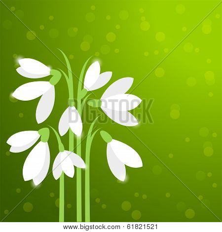 Vector  Snowdrops, First Spring Flowers