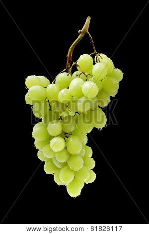 A Cluster of wet green table grapes on black background.