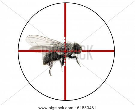 Closeup of common housefly with wings and legs isolated on white in crosshairs symbolizing pest control