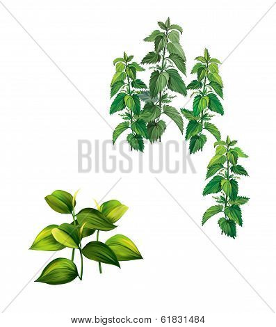 Plants with big green leaves and nettle