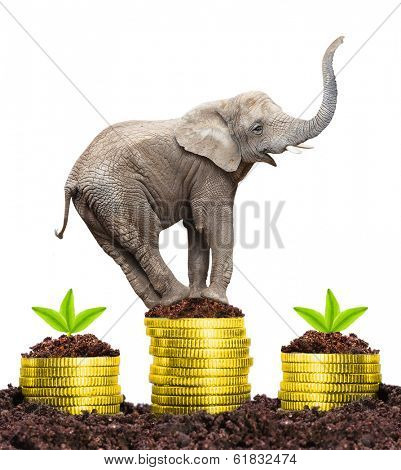 Happy Elephant on a growing pile of a golden money. Strong investments concept.