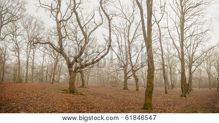 Panorama of a forest in autumn