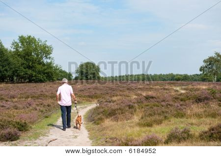 Heath In Landscape