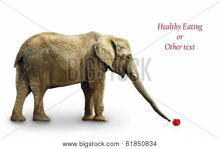 Elephant Eating Apple
