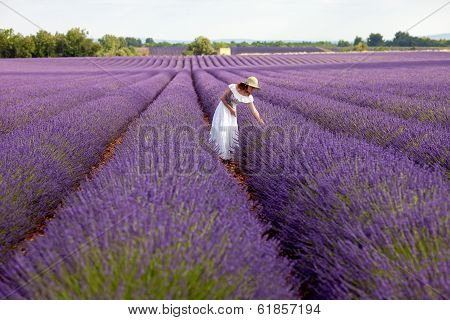 Beautiful Woman Picks Lavender In Field Of Violet Lavender, Provence, France.