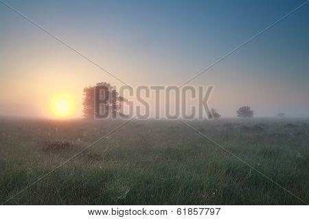 Misty Sunrise Over Summer Marsh