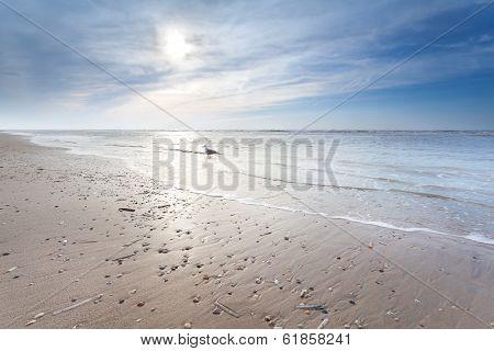 Sunny Sand Beach In North Sea
