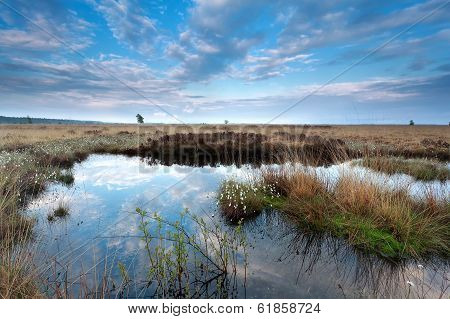 Blue Sky Reflected In Swamp Water