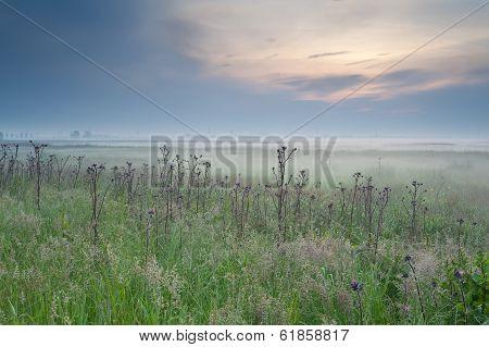 Misty Summer Sunrise Over Meadow