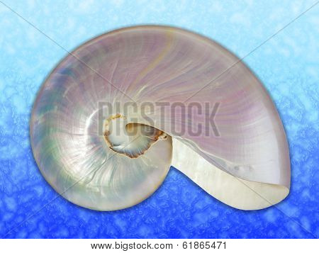 Pearl Shell Of A Nautilus.