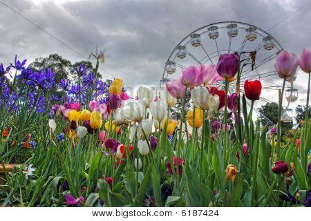 Flowers In Springtime