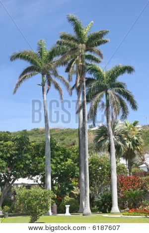 Bermuda Park