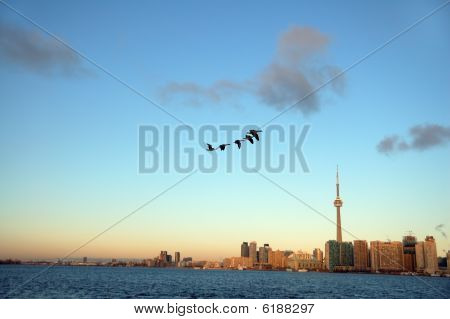 Toronto And Geese