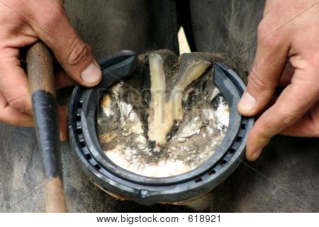 Fitting The Horse Shoe
