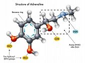 picture of neurotransmitter  - medical illustration of the structure of adrenaline - JPG