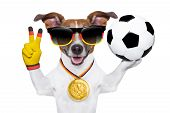 german soccer dog