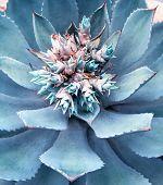 image of century plant  - Macro of succulent plant in the desert - JPG