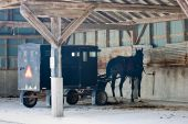 stock photo of mennonite  - A mennonite carriage with horse attached parked in an old barn - JPG