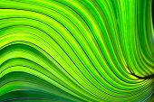 image of brighten  - a close up of a palm leaf with swirls brightened with hdr