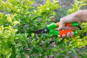picture of tree trim  - Hand cutting trees to decorate the treeCutting trees  - JPG